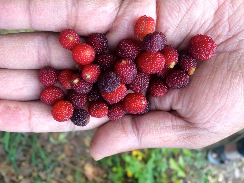 Lip smacking tangy local berries