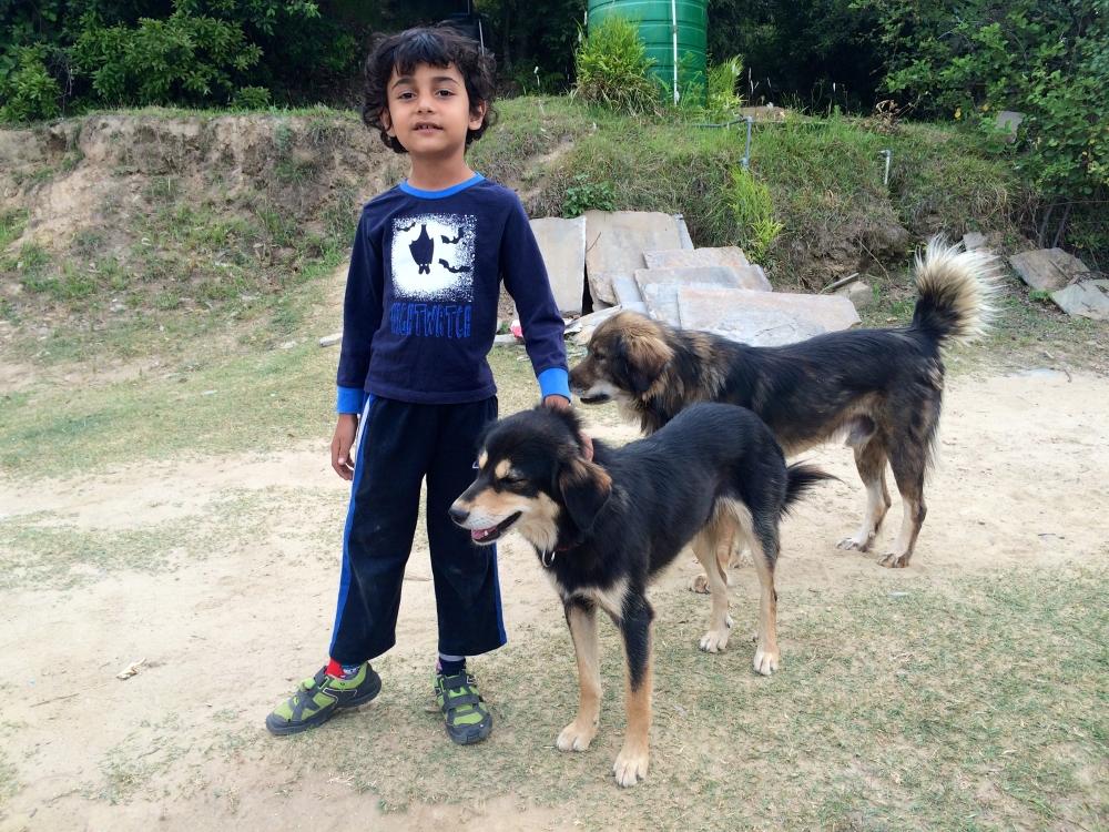 Mountain Dogs Kumaon