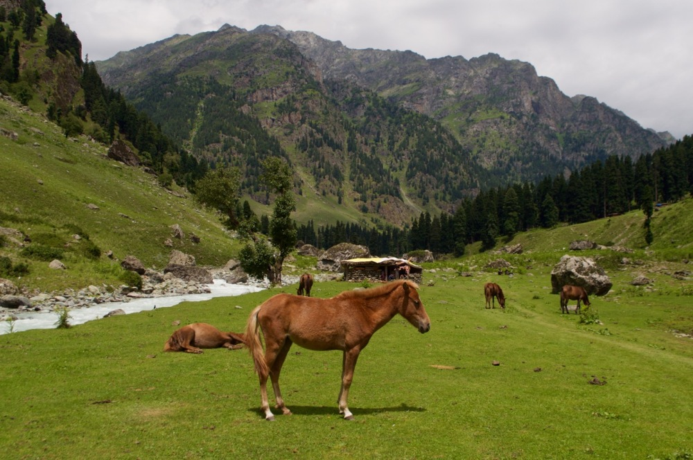 Beautiful horses run unhindered while the milky white Lidder river quietly flows by