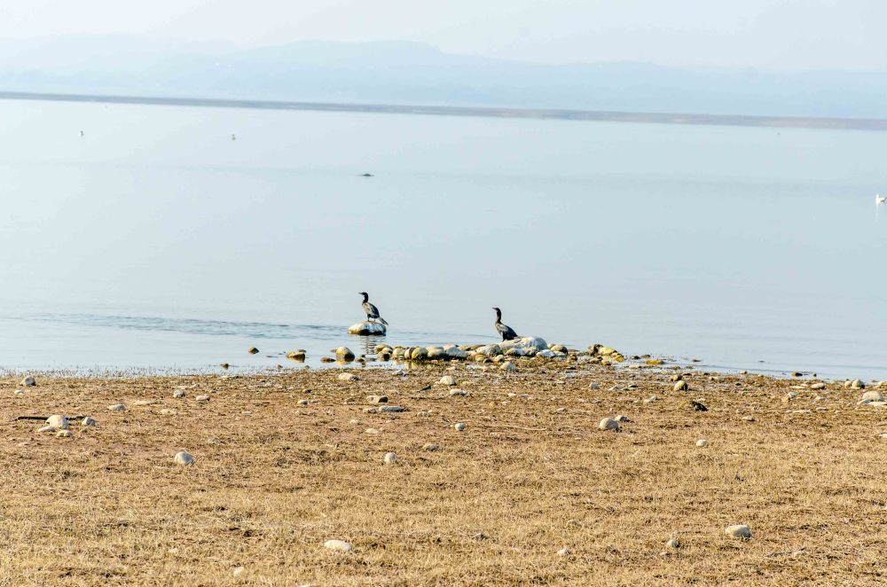 Birds Pong Lake