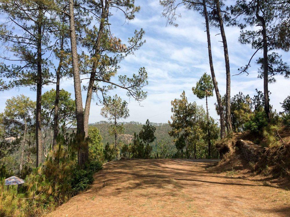 Eco park walk Kausani